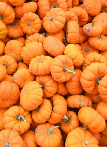 Volunteers Needs – Zeeland Pumpkin Festival